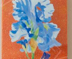 Iris bleu du jardin Bagatelle de Paris
