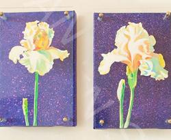 Iris jaune du jardin Bagatelle de Paris